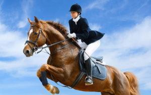 Сколько стоит застраховать ребенка для конного спорта