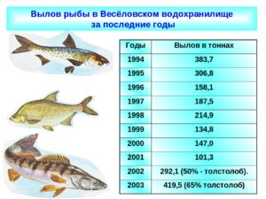 Размер рыбы которую можно брать в подмосковье
