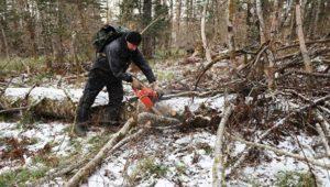 Изменения в лесной кодекс с 1 января 2020 года валежник