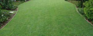 Понятие газона в законодательстве нижнего тагила