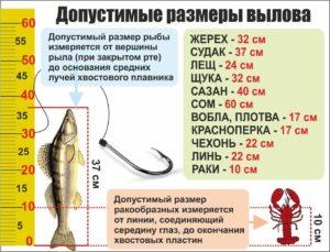Сколько крючков можно иметь на рыболовной снасти в астраханской области