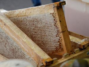 Гранты на промышленное пчеловодство в чекмагуше на 2020 год