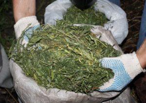 Какая статья при употреблении и хранении травы 4 кг