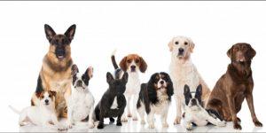 Собаки для разведения