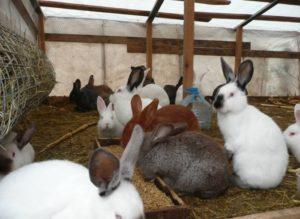 Количество животных на приусадебном участке