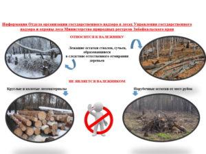 Сбор валежника в лесу 2020 закон в забайкальском крае