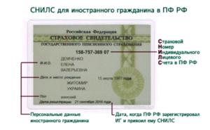 Где можно получить снилс гражданам киргизии бесплатно и адрес